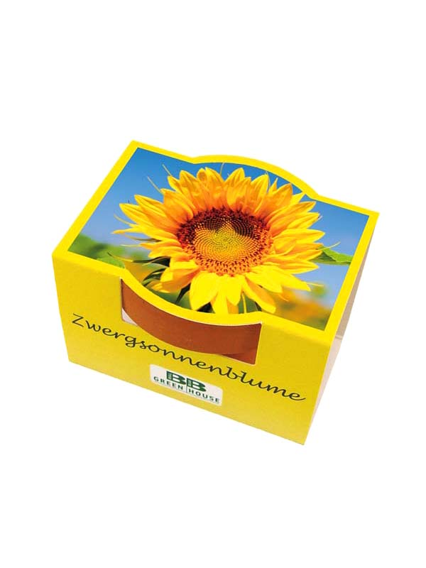 Small Plant Set Sunflower Set of 3