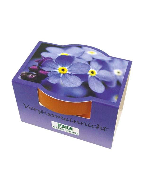 Small Plant Set Forget me not Set of 3