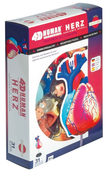 Anatomy Puzzle - the Heart