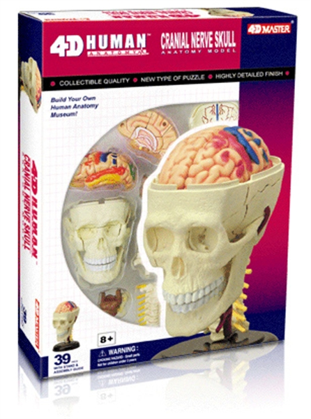 Anatomy Puzzle - the Head
