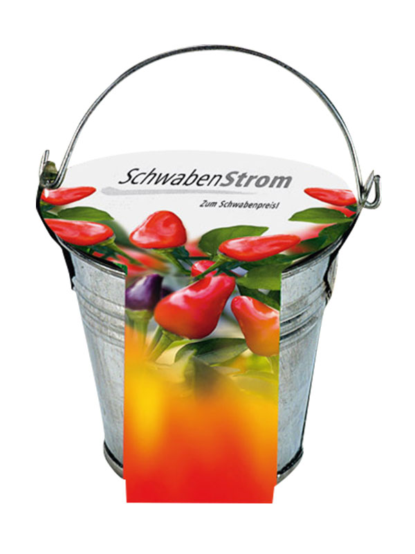Chili Plant Growing Set in a Bucket Gift Item